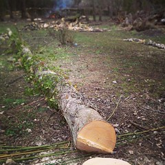 "More trees down at #hungrycyclistlodge • <a style=""font-size:0.8em;"" href=""http://www.flickr.com/photos/30386142@N06/8561876817/"" target=""_blank"">View on Flickr</a>"