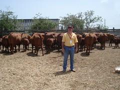 "SAINT CROIX - CARIBE - Convenção Mundial da Raça 2009  (40) • <a style=""font-size:0.8em;"" href=""http://www.flickr.com/photos/92263103@N05/8568404083/"" target=""_blank"">View on Flickr</a>"