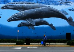 Travelling by road and sea... (Beeke...) Tags: wales mural candid streetphotography murals urbanart explore massive whiterock graywhales