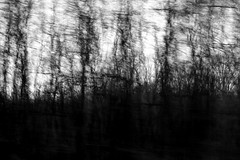 dark moment on the road (enki22) Tags: road white abstract black nature forest dark conceptual icm intentionalcameramovement enki22