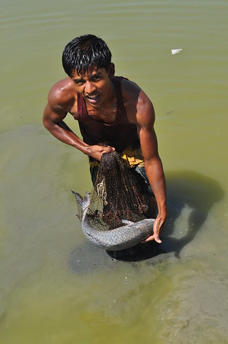 The catch of the day in Shyamnagar Upazila, Bangladesh. Photo by Sami A. Khan, 2012.