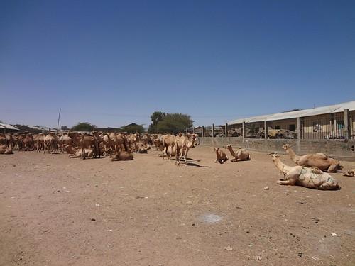 Animal Market, Hargeisa Somaliland