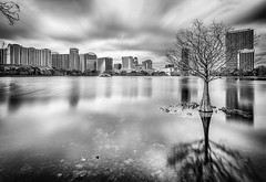 Skyline, Lake, Tree and reflection (Ed Rosack) Tags: longexposure blackandwhite bw usa cloud lake reflection building tree water fountain weather architecture buildings landscape orlando lowlight cityscape florida structures cyprus lakeeola flowersplants centralflorida ndfilter neutraldensityfilter architectureandbuildings othermanmade