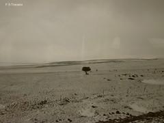 Paisaje de Avila, desde el tren. 1. Avila landscape from the train. 1. (Esetoscano) Tags: winter españa snow fog train landscape tren spain nieve paisaje invierno niebla avila castillayleón