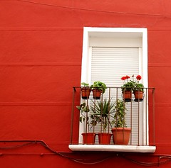 de balcones primaverales (Mims ^-^) Tags: flowers red espaa white flores primavera blanco pared spring spain rojo balcony alicante persiana flowerpot 1855mm petrer canoneos1100d