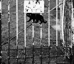 Careful ... (Giuli Musico) Tags: dog cane cat gate gatto careful