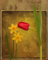 Tenderness (njk1951) Tags: flowers texture spring daffodil tulip springflowers tenderness photomix redtulip yellowdaffodil tatot creativephotocafe besteverexcellencegallery