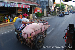 vigan pig (BohemianTraveler) Tags: old city horse heritage architecture island town site asia pacific district philippines colonial chinese unesco mexican spanish filipino sur vigan ilocos kalesa luzon calesa mestizo