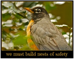 nurturing nests are so necessary today (colorfulexpressions) Tags: robin boston 6ws marathon sixwordstory safety tragedy prayers sympathy nestbuilding nurturing colorfulexpressions