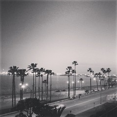 Palm trees > homework (svllcn) Tags: california trees white black beach square long palm willow squareformat 920 lumia phoneography instagramapp uploaded:by=instagram