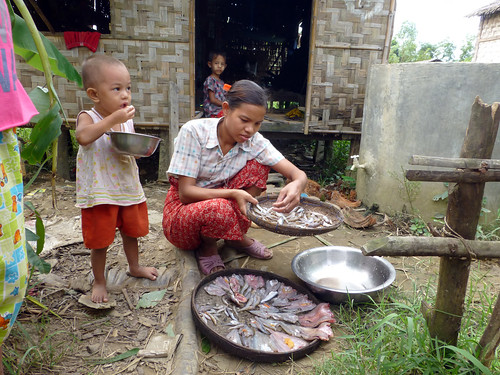 A women preparing fish for sun drying  in Ayeyarwadi  delta, Myanmar. Photo by Jharendu Pant, 2012.