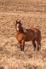 _MG_9985 (Jeri Childs/Greyhawk) Tags: horses oregon wildmustangs steensmountains
