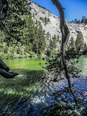 Thirsty (Ab imo corde) Tags: thirsty nature lake lago acqua water cold fredda blue sky albero tree