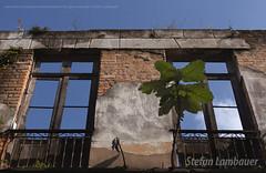 Rua do Comrcio (Stefan Lambauer) Tags: ruadocomrcio runas casaro windows old abandoned abandonada building brasil brazil santos stefanlambauer 2016 sopaulo br
