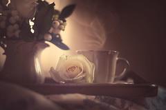 Be still (RoCafe) Tags: pentacon pentacon50mmf18 stilllife rose white tea cup nikond600