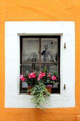 people in the window (overthemoon) Tags: switzerland suisse schweiz svizzera romandie vaud nyon oldtown details rive thursdaywalk utata window flowers photograph frame white orange utata:project=tw539