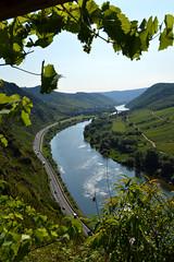 Looking through the vine leaves (sharonjanssens) Tags: mosel moezel germany river vine leaves view landscape