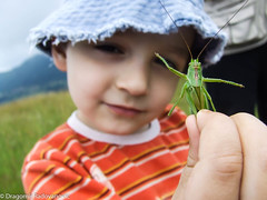 Boy with the grasshopper (radebg) Tags: unusual fun finger happyeaster concept wing skin trust small looking summer child outside outdoors green portrait people tranquil male smile insect cute nature happiness grasp young joy rural bug boy natural hold positive closeup wild wildlife beautiful cheerful alien grasshopper infant beetles pretty fauna human hopper entomology
