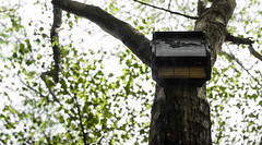 Hogar dulce hogar de murcielagos (cybersoftdesign) Tags: murcielagos caseta naturaleza arbol nikon 50mm d5100 hojas