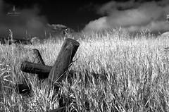 teton_infrared_2016_2web (Jessica Haydahl Photography) Tags: grand teton national park wyoming tetons mormon row john molton barn apsens fall colors infrared photography nikon d810 d7000 pentax 645z medium formate landscape ansel adams