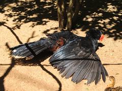 """Le Parc des Oiseaux d'Iguaçu: non, son bec rouge n'est pas cassé. Ces oiseaux-là ont juste un bec très bizarre ;) <a style=""""margin-left:10px; font-size:0.8em;"""" href=""""http://www.flickr.com/photos/127723101@N04/29351973510/"""" target=""""_blank"""">@flickr</a>"""