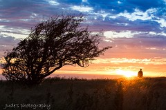 Shadow in the evening (judethedude73) Tags: clouds shadows tree colours color landscape nature sun sunsets sunset dusk autumn skies sky silhouette colour light