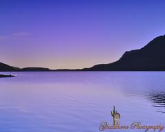 Purple sky (Ghatahora Photography) Tags: bhupinderghatahora capturenx2 ghatahoraphotography pamberforestpamber cloudstreessunset cyanotypestonning landscapes naturetreebwcloseup sunriselakeslakedistrict