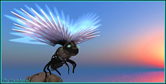 Envole toi ... (Tim Deschanel) Tags: life bird lady landscape island tim dream sl second paysage exploration deschanel rikku rêve xzone yalin ukulhas