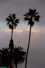 LAXPalms144 (mcshots) Tags: california winter sunset sky usa clouds palms coast losangeles stock socal lax mcshots 020713