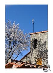 girouette (chacom comcha) Tags: fleur soleil photographie village maison eus amandier girouette volet