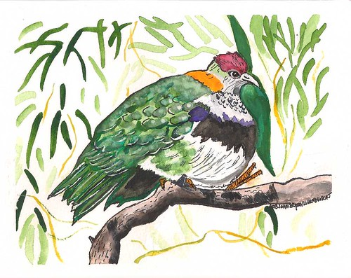 Super Fruit Dove