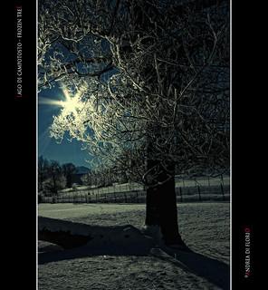 Lago di Campotosto - Frozen Tree