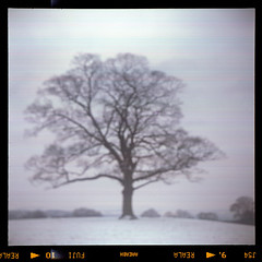 sycamore (pho-Tony) Tags: camera old uk blur color colour english 1948 120 6x6 film vintage square is fuji error 66 fujireala outoffocus f45 waist negative 1940s level 1950s british medium format veteran 90mm finder bellows glitch folder croydon agi folding reala collector 145 c41 9cm agilux agifold anastigmat 6cm tetenal waistlevelfinder 6cmx6cm