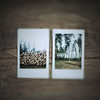 (daphne og.) Tags: wood film forest project woods fuji photos free mini days instant 365 simple instax lensing freelensing freelensed