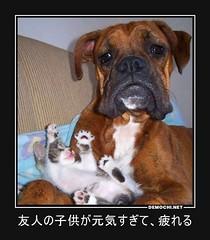 友人の子供が元気すぎて、疲れる #猫 #犬 #子供 (Demochi.Net) Tags: life cute sexy japan fun japanese motivator culture 日本 ペット 猫 demotivator 金 家族 結婚 ゲイ 女 子供 おっぱい 愛犬 政治 社会 巨乳 文化 眼鏡 教育 demotivators 経済 女性 初恋 r18 女子 カップル 子猫 女装 お笑い motivators 会社 少子化 企業 ユーモア 恋 悪い 格差 風刺 一言 デモチ 大喜利