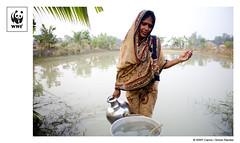 WWF-Canon Pic of the Week - Water, Sundarbans (WWF International) Tags: india water wwf westbengal sundarbans feshwater sundarbansnationalpark