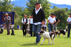 Concours de chiens (www.pyrenees-bearnaises.com) Tags: traditions fte march fromage stands chants transhumance bergers danses machinesagricoles produitslocaux concoursdechiensdebergers pyrnesbarnaises ftedesbergers