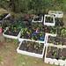 PlantingFeb13_0153R