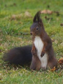 Eichhörnchen, NGIDn1292116699