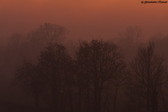 Light (Giovanbattista Brancato) Tags: light sunset tree nature fog alberi landscapes tramonto milano natura campagna nebbia paesaggi lombardia luce panorami abbiategrasso pianurapadana flickrunitedaward
