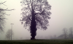 A tree in the fog. (brum) Tags: corcaigh