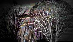 Sunset Stroll in the Woods (Rusty Russ) Tags: seattle trees light sunset white black color statue clouds photoshop dark real yahoo google woods flickr image walk massachusetts manipulation national montage geographic bing newburyport facebook stumbleupon daum
