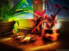 La chaleurs des couleurs...