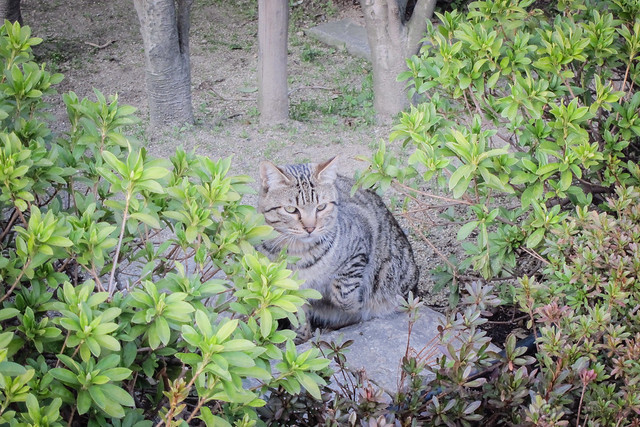 Today's Cat@2013-03-23