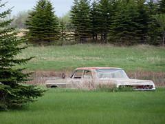 American Hero (Fairlane221) Tags: auto classic chevrolet abandoned field car sedan rust rusty chevy forgotten northdakota nd knox impala 1964 fourdoor