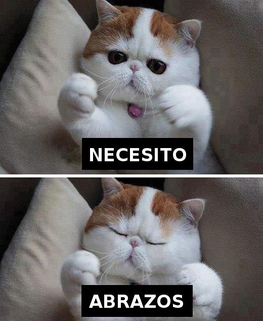 gato_abrazos