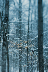 Winter Hush (five one nine) Tags: blue trees winter snow ontario canada tree nature pinetree lensbaby rural forest outdoors frozen day quiet tranquility nopeople dreamy wonderland brucepeninsula magical tranquil fiveonenine sylviamioduszewska edge80