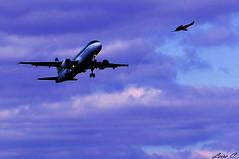 Flying like a bird (Pinkiwinki06) Tags: blue ireland sunset sky dublin bird fly flying airport peace sony dream like sueos pajaro bye avin aerlingus irlanda