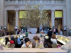 Dogwood Blossoms and Information (Eddie C3) Tags: newyorkcity metropolitanmuseum metropolitanmuseumofart