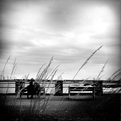 VOYEUR IN THE REEDS (GVSTRADAMVS) Tags: camera city trees sky urban canada nature water toy island holga lomo quebec montreal streetphotography retro filters lachine canaa retrocamera